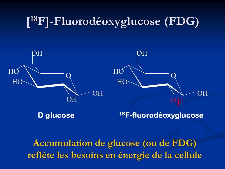 [18F]-Fluorodéoxyglucose (FDG)